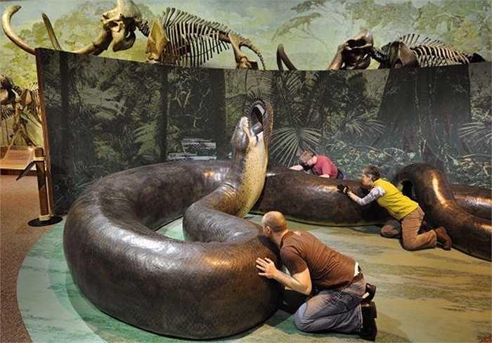 Mãng xà Titanoboa. Mãng xà Titanoboa xếp vị trí đầu bảng dù chúng đã không còn tồn tại trên hành tinh chúng ta. Titanoboa là một chi rắn từng sinh sống khoảng từ 60 tới 58 triệu năm trước, là loài rắn to lớn nhất được phát hiện từ trước tới nay.