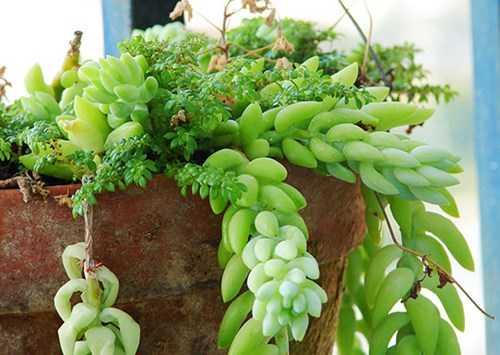Những loại cây không được trồng trong nhà