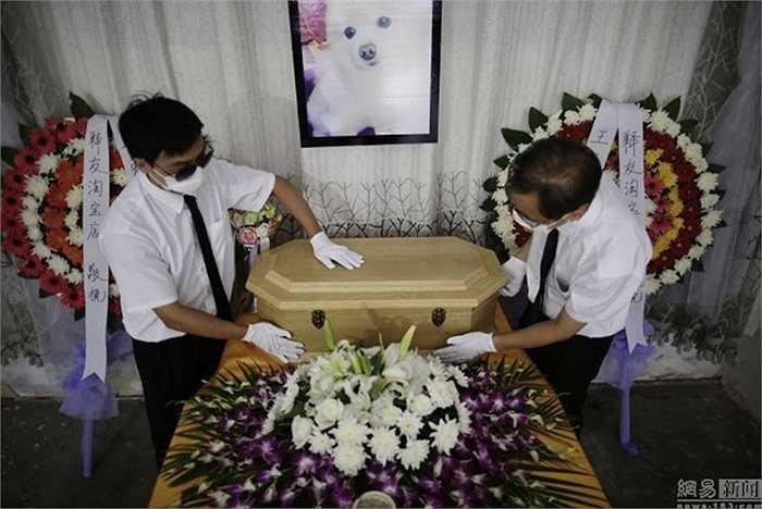Một công ty ở Thượng Hải vừa cung cấp dịch vụ đám tang cho vật nuôi cưng trong nhà. Đám tang này gồm có các nghi lễ tưởng nhớ, xe Audi đưa thi thể đến nhà tang lễ