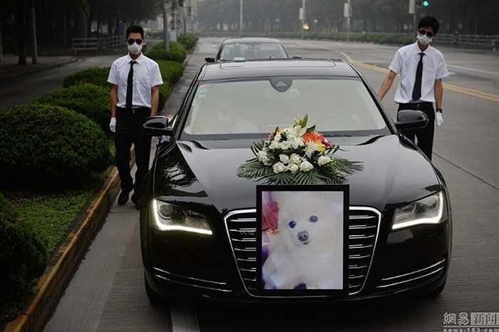 Nhân viên phục vụ lễ tang sẽ đứng bên cạnh xe tang. Trong đó, xe tang đưa quan tài đến nhà tang lễ là Audi