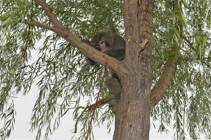 Chỉ trong vòng vài giây, chúng đã có mặt trên ngọn cây và phá bay tổ chim