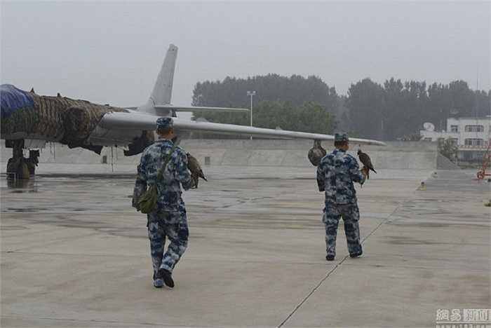 Khu vực xung quanh sân bay ở Bắc Kinh là nơi trú ngụ của nhiều loài chim, vì vậy nó có thể là cản trở lớn ảnh hưởng đến cuộc diễu binh của quân đội Trung Quốc tuần này