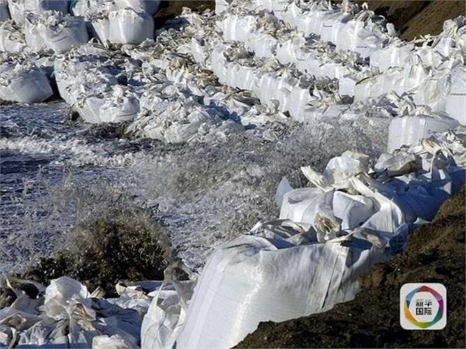 Theo các nhà khoa học dự đoán, tới năm 2025, mảnh đất này sẽ bị biến mất hoàn toàn do chìm xuống Bắc Băng Dương