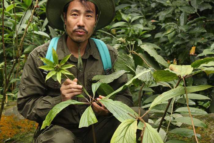 Anh Thanh trong khu rừng thảo dược thất diệp nhất chi hoa do anh gieo trồng.