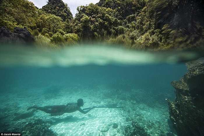 Lặn hàng mét dưới nước để săn cá