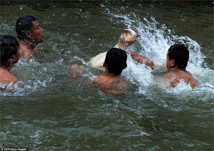 Tổ chức Bảo vệ Động vật Nepal (AWNN) phát động một chiến dịch nhằm phản đối nghi thức hiến tế ở lễ hội trong nhiều năm qua.