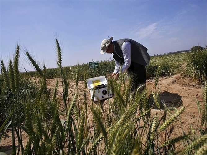 6. kỹ sư nông nghiệp - Mức lương trung bình năm: 75.440 USD  Mô tả công việc: Áp dụng kiến thức công nghệ kỹ thuật và khoa học sinh học để giải quyết các vấn đề về nông nghiệp, bao gồm các vấn đề liên quan đến điện khí hóa, máy móc, bảo tồn tài nguyên đất và nước, chế biến nông sản.  Yêu cầu: Cử nhân, tốt nhất là cử nhân ngành kỹ thuật nông nghiệp hoặc kỹ thuật sinh học.