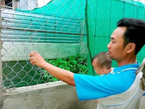 Kẻ trộm cắt lưới B40 vào chuồng bắt trộm 48 con cá sấu của chị Tuyền - Ảnh: Trần Thanh Phong