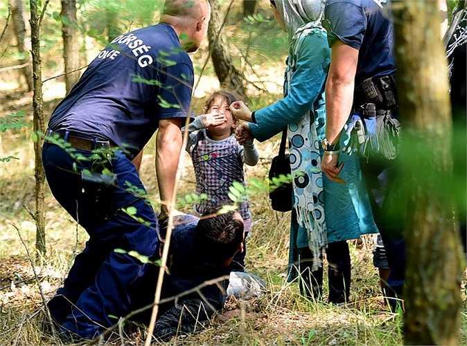 Bé gái khóc thét lên khi nhìn thấy cảnh sát bắt giữ bố cô bé ở làng Roszke, vùng biên giới Hungary - Serbia