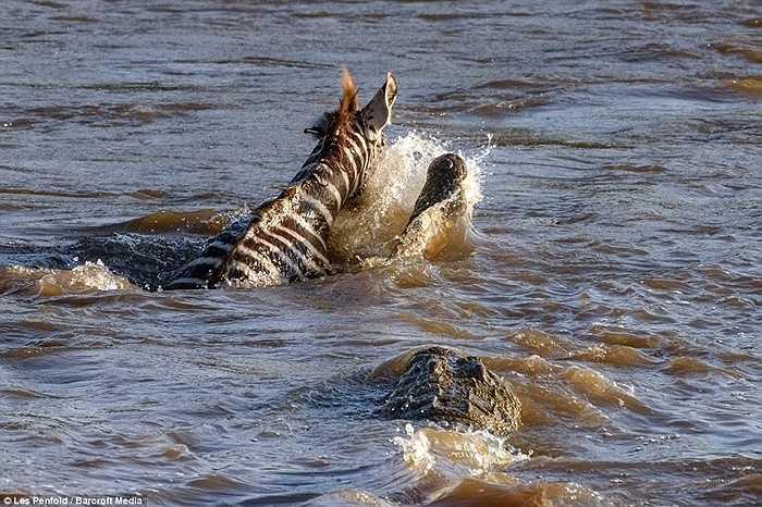 Nhưng lòng sông có thể xem như sân nhà của cá sấu