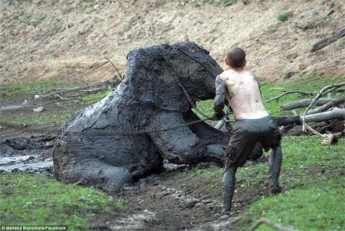 Cả người và voi đều cố sức để thoát khỏi 'vũng bùn tử thần'