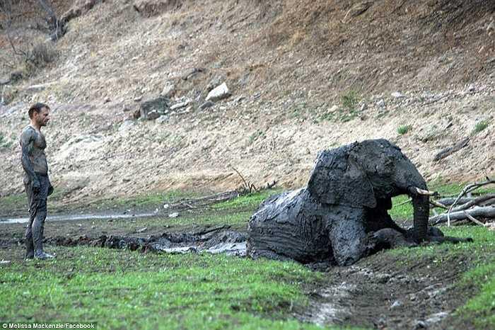 Tuy nhiên, sau khi thoát khỏi vũng bùn, con voi vẫn không thể tự đứng lên, không ăn uống được và đã chết