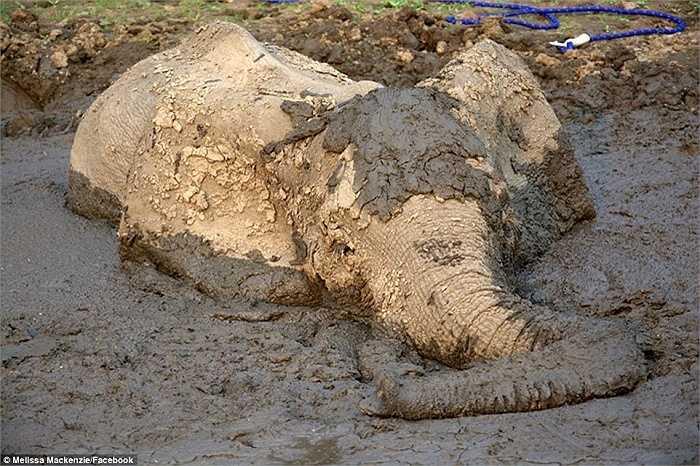 Con voi bị mất nước và kiệt sức