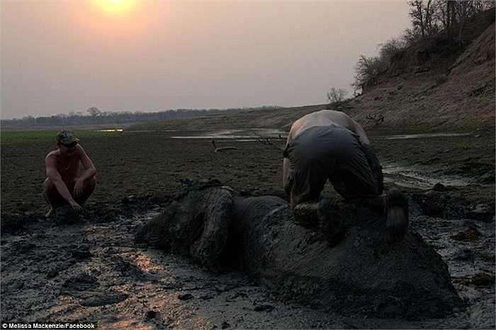 Hai người đàn ông chạy đua với thời gian để giải cứu voi trước khi trời tối