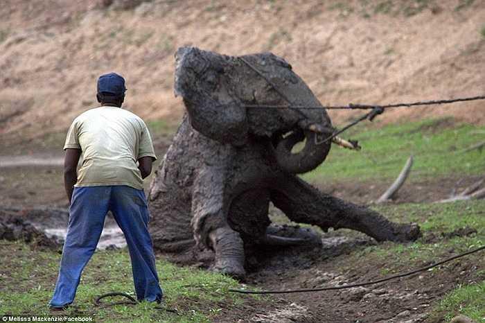 Cuối cùng thì con voi cũng được kéo lên bờ