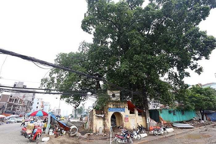 Trên tuyến đường này, đoạn qua cổng làng Nghĩa Đô (Cầu Giấy) có một cây đa cao hơn 20 m, tán rộng hơn 100 m2, nằm án ngữ. Theo bà Hương, người bán nước ở đây cho biết, cách đây 50 năm, các cụ đã kể lại cây đa này hơn 100 tuổi. 'Cây như linh hồn của cả khu dân cư nên việc giữ lại để bảo tồn là việc làm đúng đắn của Hà Nội', bà Hương nói.