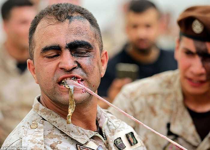Một binh sỹ biệt kích Lebanon xé miếng thịt rắn tươi