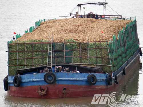 Tàu chở dăm gỗ - Ảnh MK