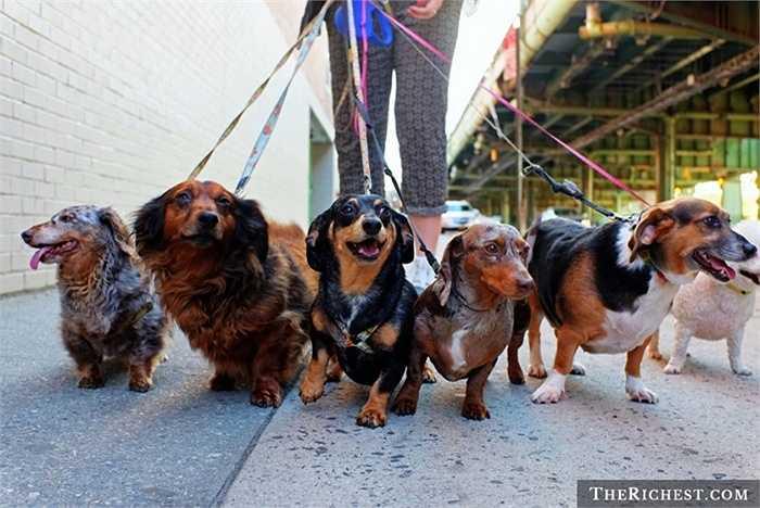 1. Dắt cho đi dạo. Ngày này, công việc này khá phổ biến trong các khu đô thị và thú cưng ngày càng được cưng chiều. Dắt cho đi dạo trong 1 tiếng có thể mang lại 50 USD cho người làm