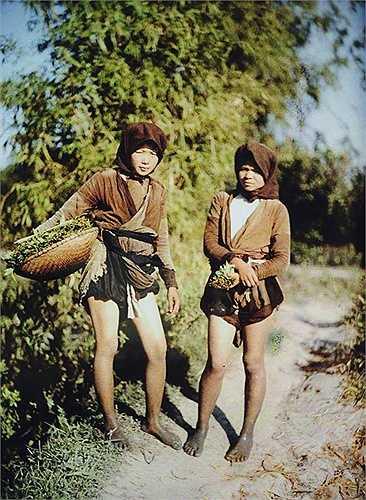 Các thiếu nữ đi hái rau.