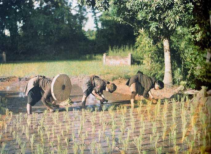Văn hóa lúa nước 100 năm trước có khác với bây giờ?