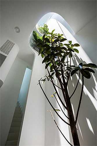 Cây xanh được trồng ở nhiều vị trí trong nhà.
