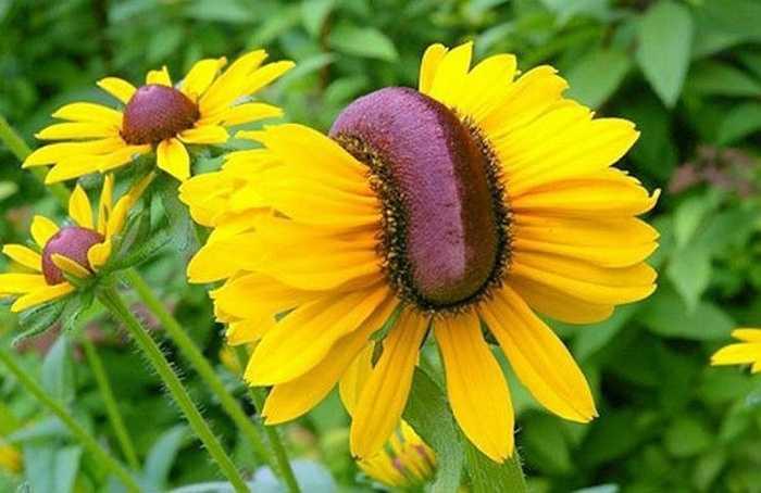 Những bông hoa không giữ được hình dáng như ban đầu