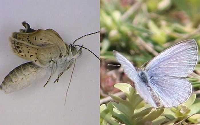 Một con bướm bị nhiễm phóng xạ và có thêm chân, râu và cánh bị biến dạng nặng nề