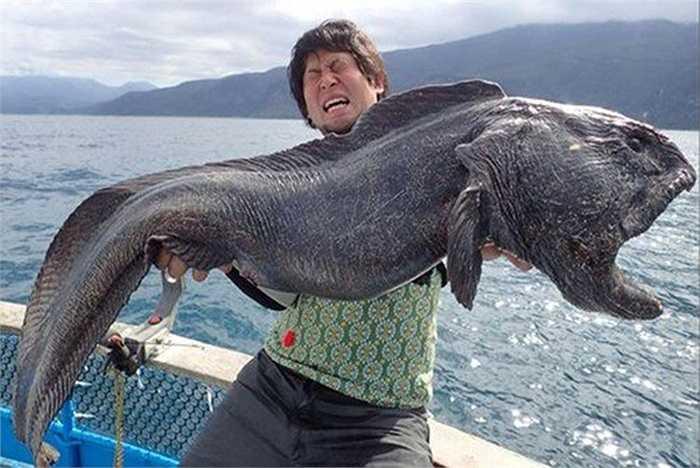 Gần đây nhất, một người ngư dân đã chinh phục một con cá sói khổng lồ đài tới 2m (so với bình thường là 1,2m) và dấy lên nghi ngờ về việc con vật này bị nhiễm phóng xạ