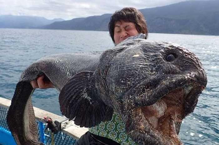 Cận cảnh cái miệng rộng lớn và ghê rợn của con cá sói
