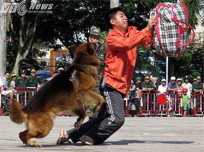 Đối tượng bất ngờ cướp tang vật đã bị chú chó truy bắt.