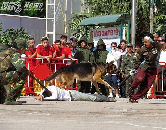 Tuy nhiên, các chú chó vẫn quyết tâm truy đuổi, tấn công đối tượng.
