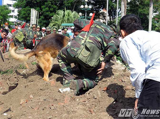 Các chú chó chiến đấu còn tham gia tìm kiếm cứu hộ, cứu nạn thiên tai.