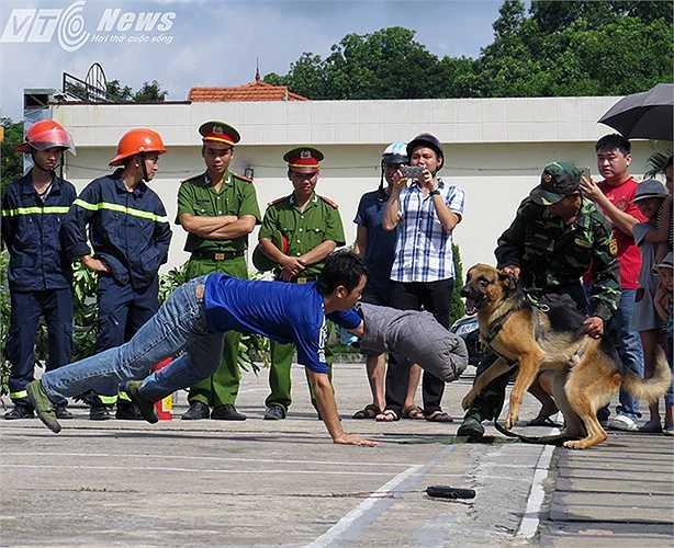 Các chú chó quyết liệt truy bắt đối tượng.