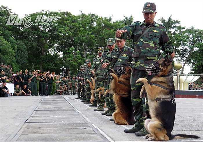 Màn chào hỏi của các chú chó chiến đấu