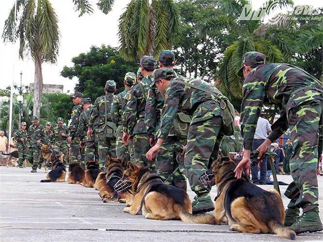 Bài tập nghiệp vụ huấn luyện chó chiến đấu