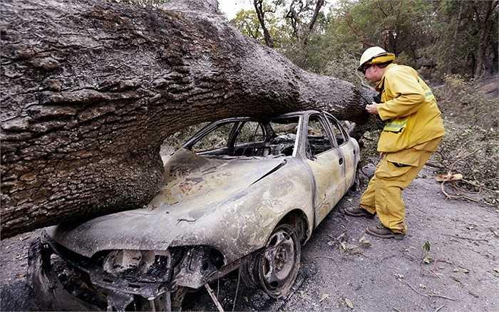 Một chiếc xe ô tô cháy rụi bị cây lớn đè lên  tại khu nghỉ mát Harbin Hot Springs sau vụ cháy rừng gần Middletown, California
