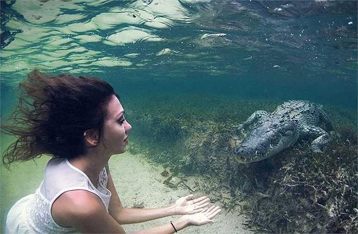 Người mẫu Italia Roberta Mancino liều mình bơi cùng những con cá sấu hung dữ tại vùng vịnh Mexico để hiện thực hóa ước mơ được chụp hình với các loài động vật