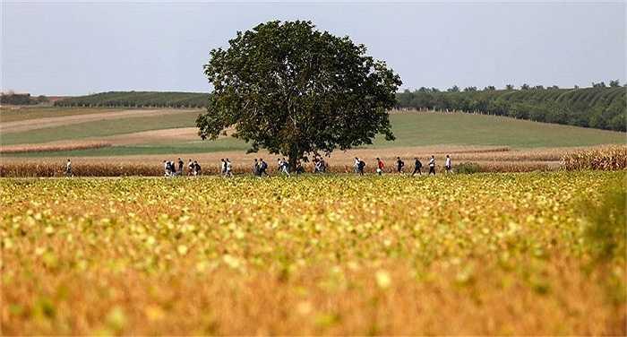 Đoàn người di cư đi qua cánh đồng ở vùng biên giới Serbia và Croatia