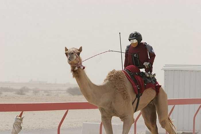 Những chú robot Dubai tham gia vào giải đua lạc đà. Giá của một robot đua lạc đà dao động từ 300 đến 10.000 USD. So với con người, chúng nhẹ hơn và linh hoạt hơn
