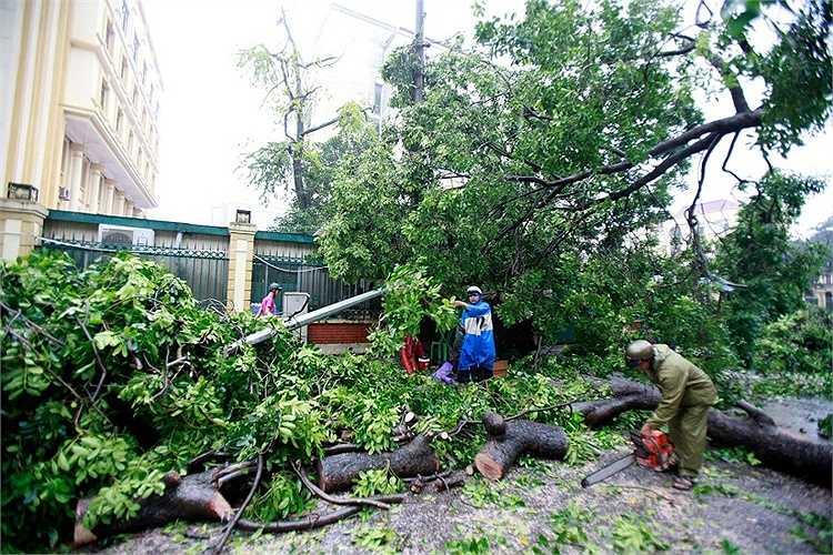 Lực lượng chức năng đã phải cưa chặt các cành cây...
