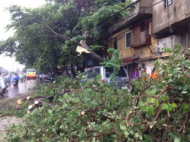 Trên đường Trần Quang Khải, một cây lớn cũng bật gốc sau trận mưa.