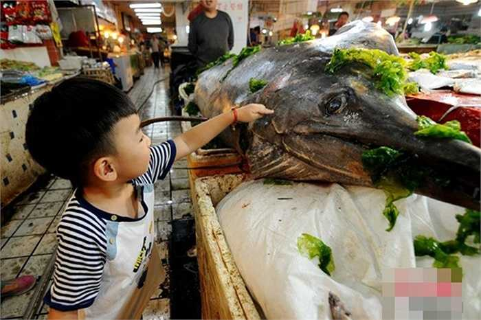 Con cá này nặng đến mức phải dùng cần cẩu để cẩu vào bờ chứ không thể kéo lên bằng tay như các con cá khác
