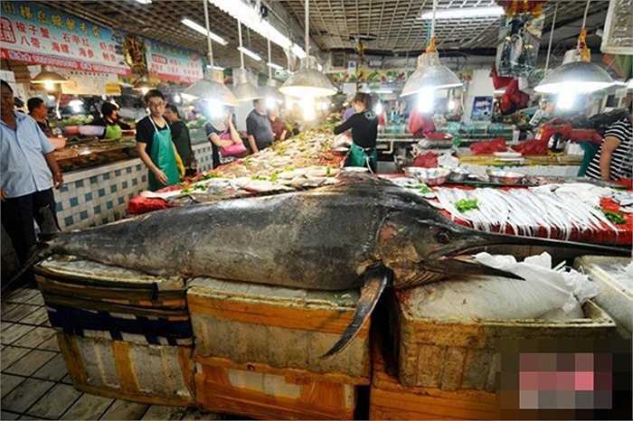 Con cá kiếm đó từng thu hút rất nhiều người tới xem vì lần đầu tiên có một con cá kiếm lớn đến như vậy được bán ra ở chợ