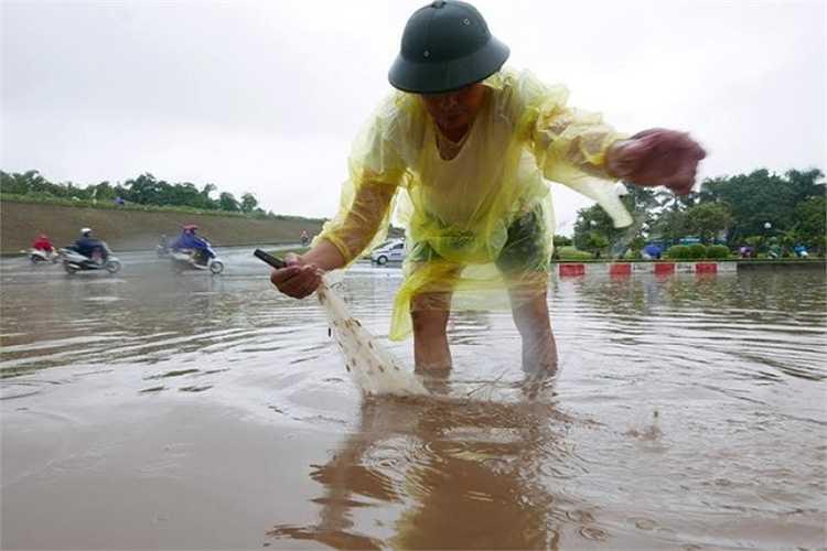 Là trọng điểm mưa, quận Long Biên bị ngập nặng. Đường Cổ Linh ngập sâu 50 cm, cá bơi lội tung tăng. Ông Nguyễn Khánh, 64 tuổi, ở phường Bồ Đề (Long Biên, Hà Nội) tranh thủ mang lưới ra phố bắt cá.