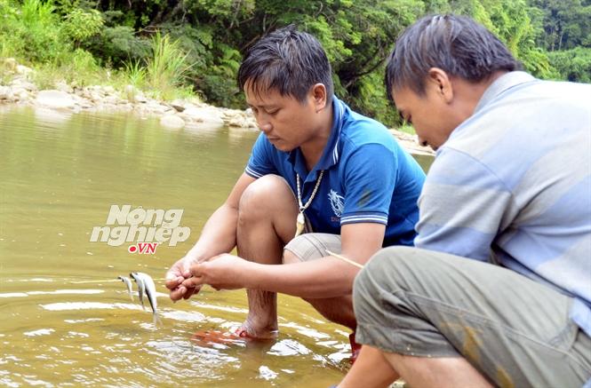 Cá dính phải Pachac dùng làm thức ăn và người ăn không bị ngộ độc