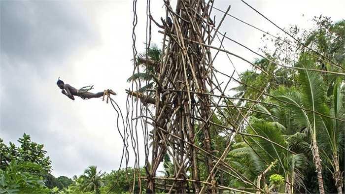 Ở quốc đảo Pentecost trên Thái Bình Dương, các cậu bé từ 5 tuổi đã phải nhảy xuống đất từ độ cao 30 mét với chỉ hai sợi dây buộc giữ hai mắt cá chân. Tục lệ này đã có từ 1500 năm trước và thực sự rất nguy hiểm cho những người trẻ tuổi.