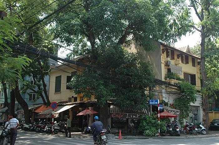 Do đều nằm ở các khu vực trung tâm của Thủ đô, diện tích lớn nên các ngôi biệt thự đều có giá vô cùng đắt đỏ. Trong ảnh là ngôi biệt thự cổ nằm ngay ngã ba Trần Bình Trọng - Trần Quốc Toản đang được sử dụng để kinh doanh cà phê.