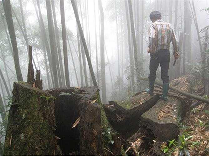Vì mưu sinh, không ít người mạo hiểm lên rừng thiêng, nước độc, đi vào vùng nước đầm lầy để săn rắn độc, trăn khổng lồ.