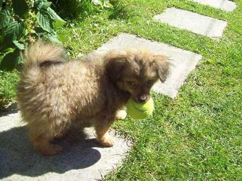 Bức ảnh chú chó được tổ chức Cause Animale Nord đăng tải lên Facebook